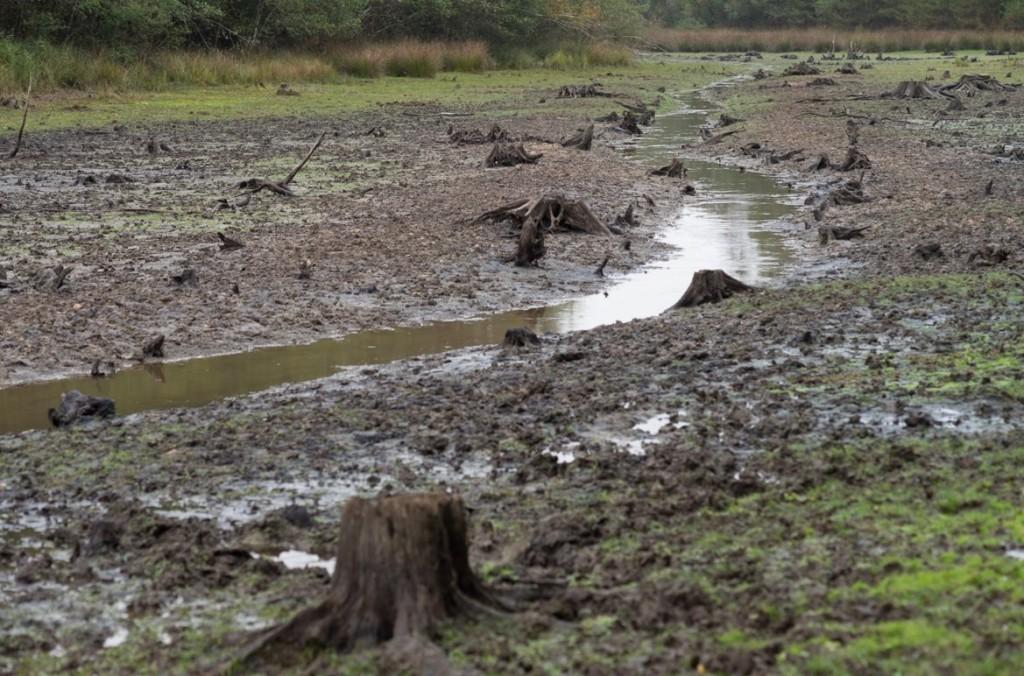 L'étang du Ravoir