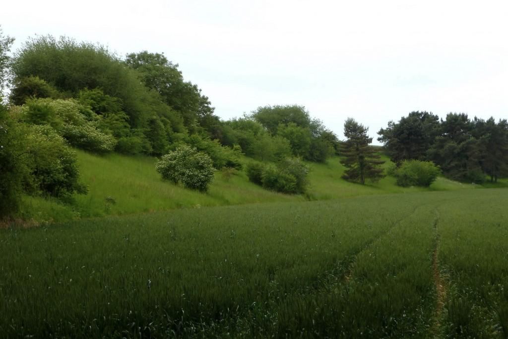Autre pelouse calcaire