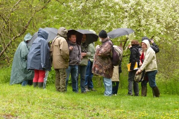 Sous un arbre et sous la pluie Copyright Dominique Leroy